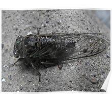 Cicada Bug Poster