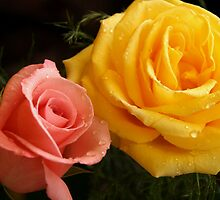 Pink and Yellow Roses in Dew by Cushman