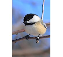 Black-Capped Chickadee Jan 2010 Photographic Print