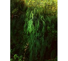 Asparagus Jungle Photographic Print