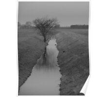 Damp tree BW Poster
