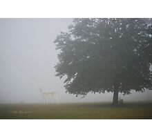 Foggy Country Morning Photographic Print