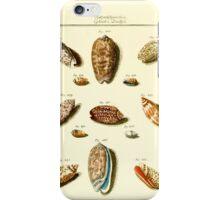 Neues systematisches Conchylien-Cabinet - 150 iPhone Case/Skin