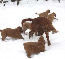Snow Dancing With Puppies- '10 by goldnzrule