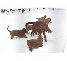 Snow Dancing With Puppies- '10 Poster