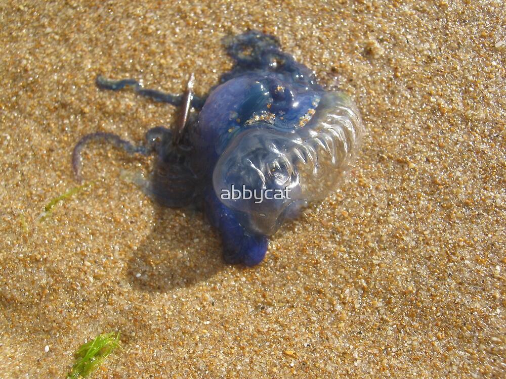 Bluebottle by abbycat