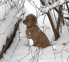 Snow Puppies!  by goldnzrule