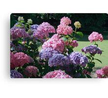 Hydrangea - The Gorge Launceston Canvas Print