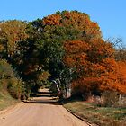 Autumn Country Lane by Jerry Segraves