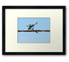 Barbed Wire Dragonfly Framed Print