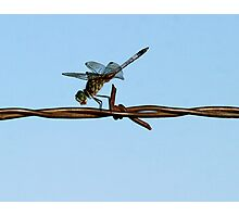 Barbed Wire Dragonfly Photographic Print