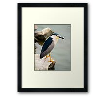 Black Crowned Night Heron Framed Print