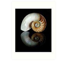 Shell Symmetry Art Print