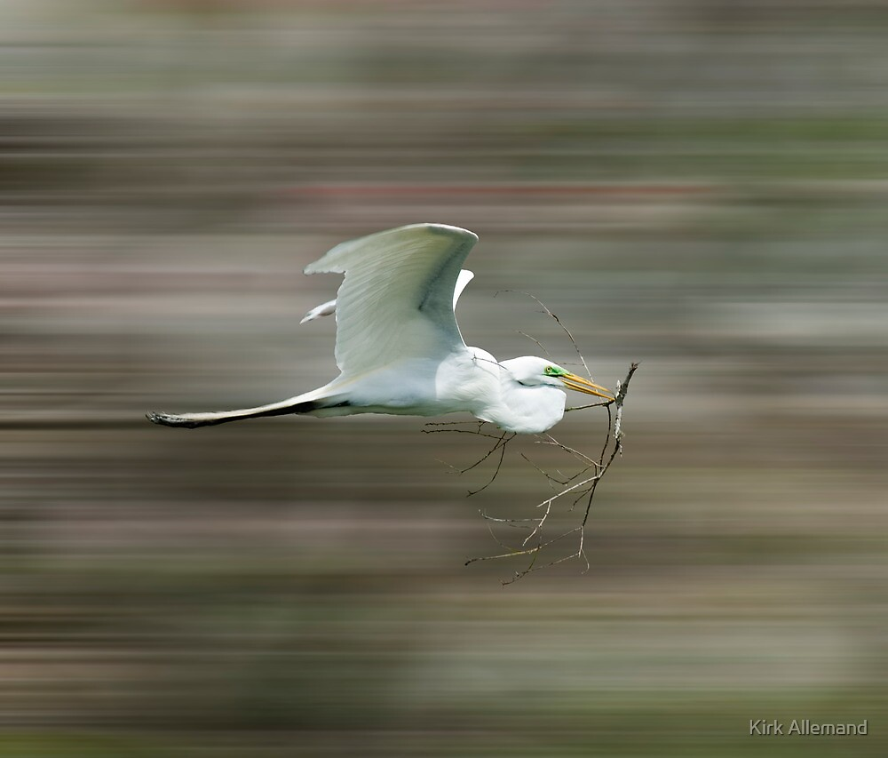 Egret in Motion by Kirk Allemand