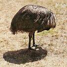 Emu by Roz McQuillan