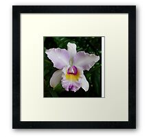 An Unknown Beauty Framed Print