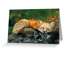 Red Fox Sleeping Greeting Card