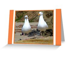 Two Lovely Seagulls Greeting Card