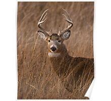 Nice Buck Poster