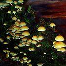 """""""Mushrooms Galore"""" by Lynn Bawden"""