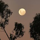 Kyneton Moon by Meg Hart