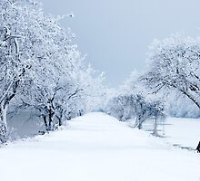 Winter Wonderland by Taylor Russell