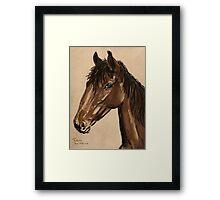 Equine Stud Framed Print