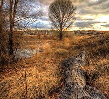 Up and Down Trees by Bob Larson