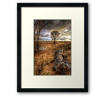 Up and Down Trees Framed Print