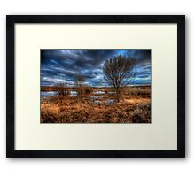 3 Trees Framed Print