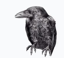 Crow by paulapaints