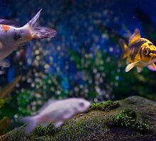 My Bubbles. by Daniel Wills