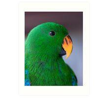 Zulu - eclectus parrot Art Print