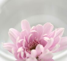 chrysanthemum by OldaSimek