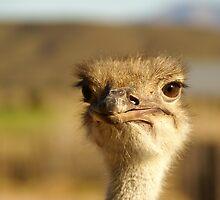 Oudtshoorn Animal 2 by Sturmlechner