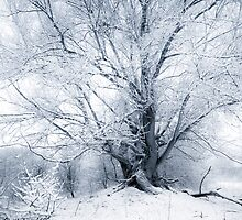Fairy Tale Winter Willow by Joop Snijder