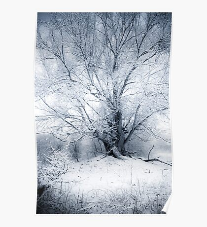 Fairy Tale Winter Willow Poster