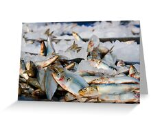 Fish Fish Fish!! : Freezing here Greeting Card