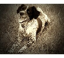 Precious in sepia Photographic Print