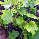 Green Grapes by ciaobella2u