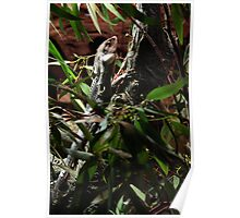 Lizard, Perth Zoo (My first SLR lesson) Poster