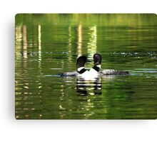 Loons in love Canvas Print