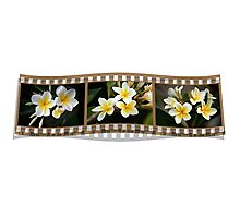 Just your plain 'ol every day white frangipani Photographic Print