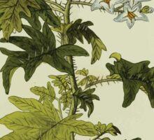 Plantarum Indigenarum et Exoticarum - Lukas Hochenleitter und Kompagnie 1788 - 360 Sticker