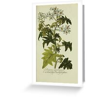 Plantarum Indigenarum et Exoticarum - Lukas Hochenleitter und Kompagnie 1788 - 360 Greeting Card