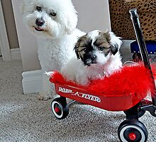 Maggie & Lily Belle 2 by Judy Grant
