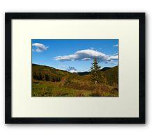 Wild coniferous  Framed Print