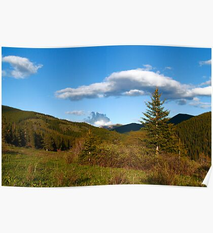 Wild coniferous  Poster