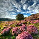 Heather & Rowan... North Yorkshire Moors. by Ian Snowdon /     www.downtoearthimages.co.uk