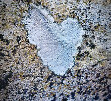 Heart on stone by Susana Weber